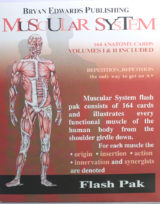 Muscular System flash cards - bryanedwards.com
